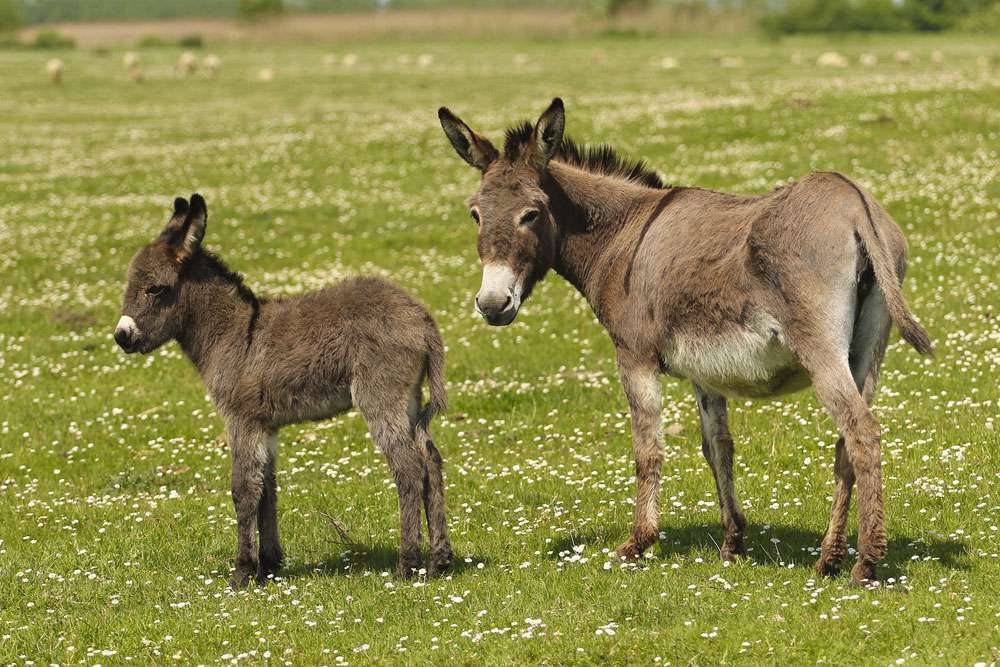 Jenny and foal