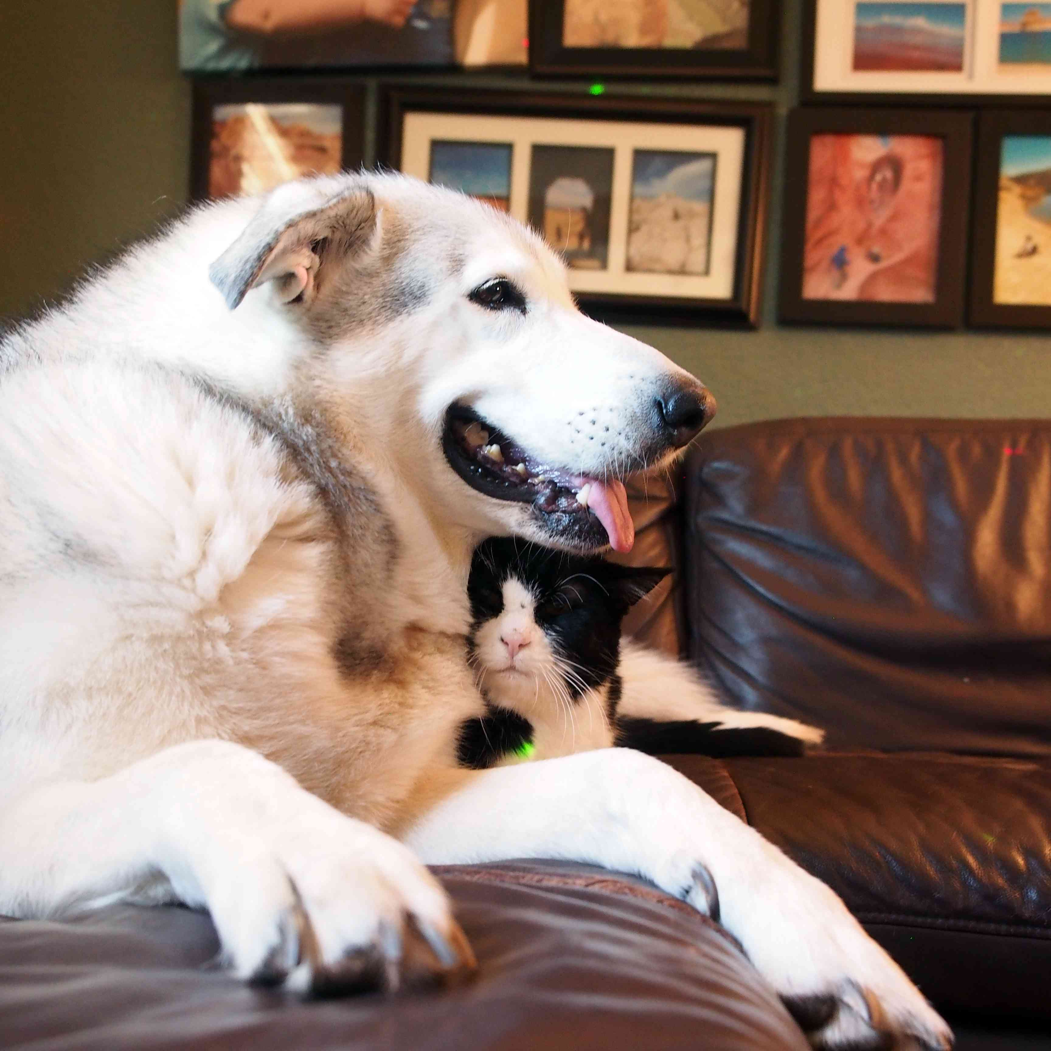 Flora the dog cuddles up with Dexter the cat.