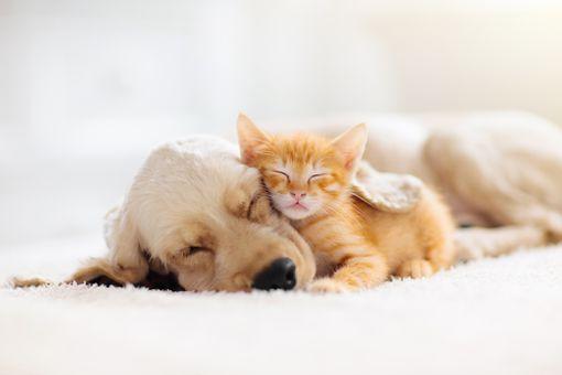 Cat and dog sleeping. Puppy and kitten sleep.