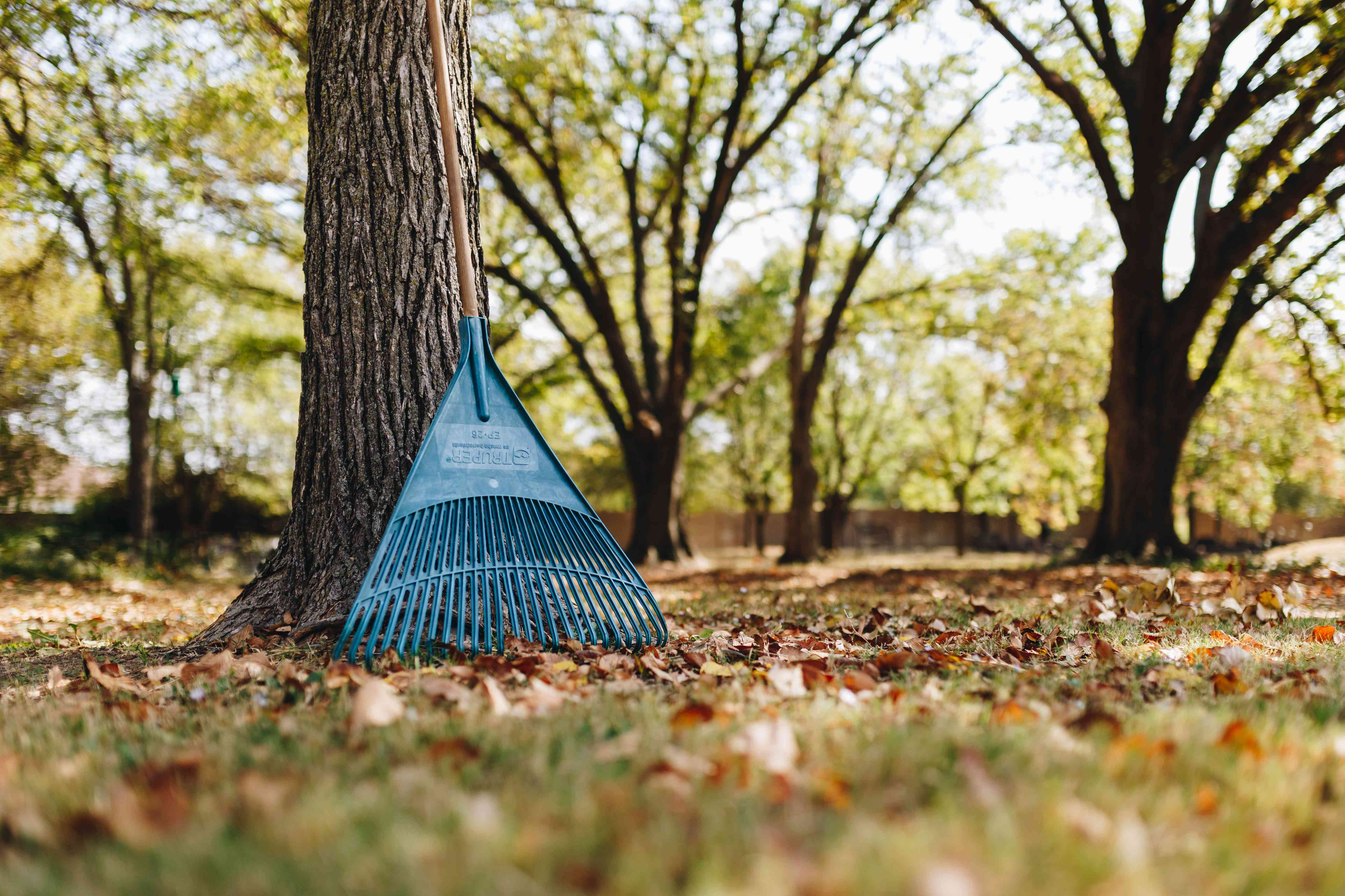 rake up against a tree yard with leaves