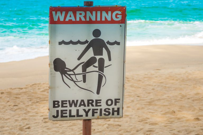 "Sign posted on a sandy beach in front of a blue ocean that says, ""Warning: Beware of Jellyfish"" and has an image of a person with a jellyfish wrapping its tentacles around the person's leg."