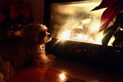 Jasper in front of fireplace