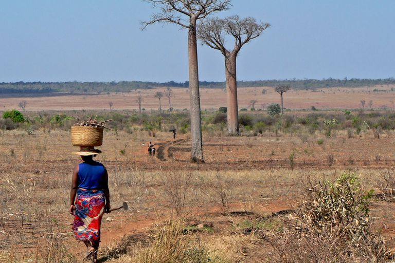 woman with basket on head in Madagascar