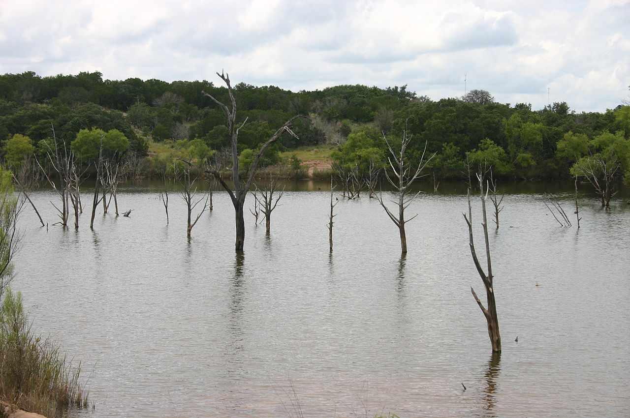 Barren trees rising from Inks Lake