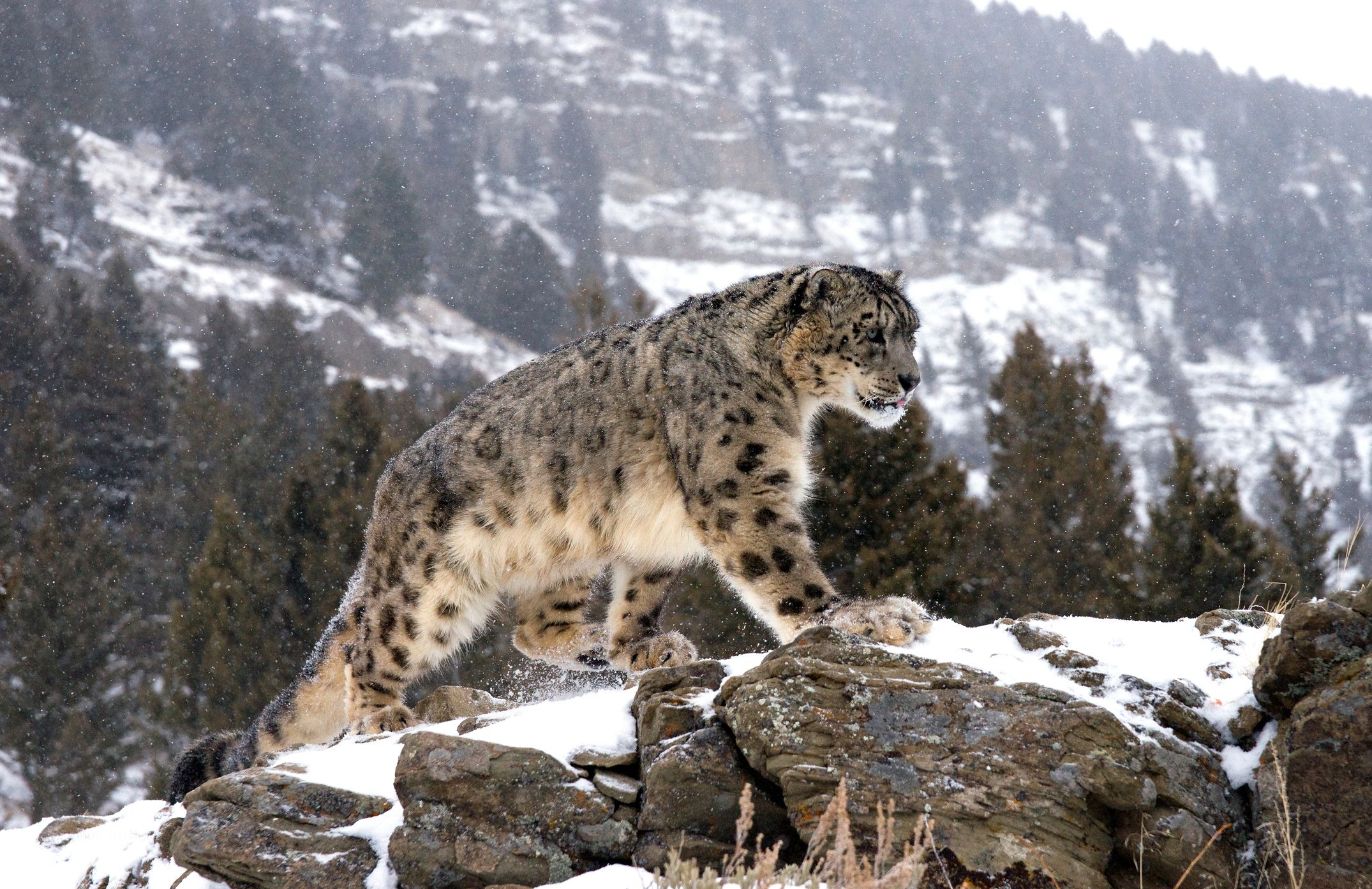 8 of the World's Most Solitary Animals