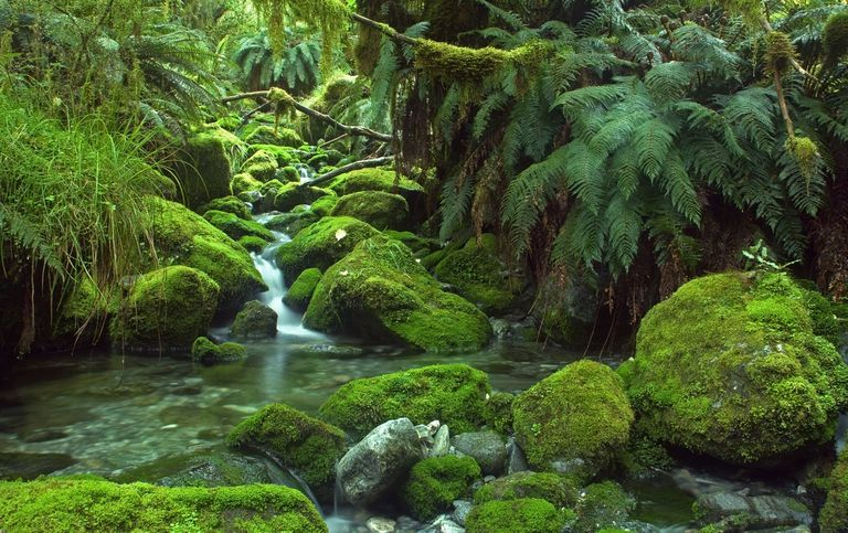 A small stream cascades over moss-covered rocks in a forest of ferns