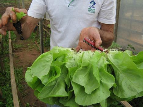 lettuce harvester image