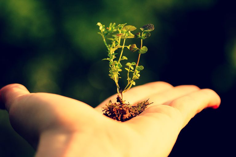 Small plant with roots and soil in the palm of a human hand.