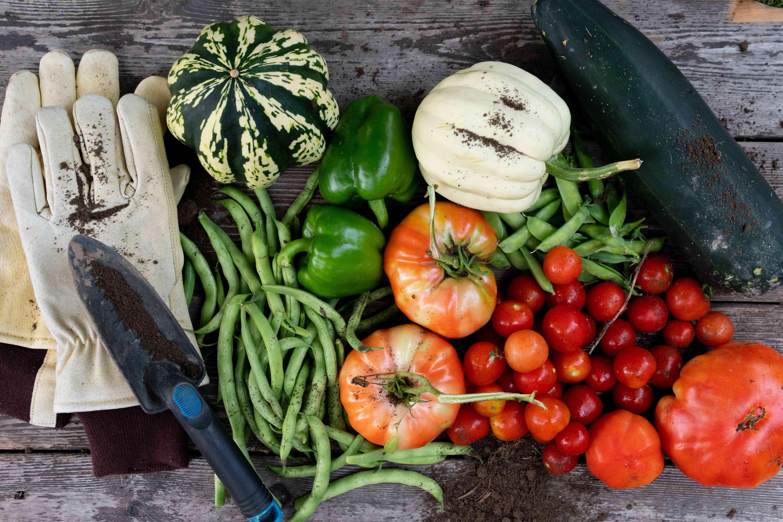 overhead shot of garden veggies and garden tools