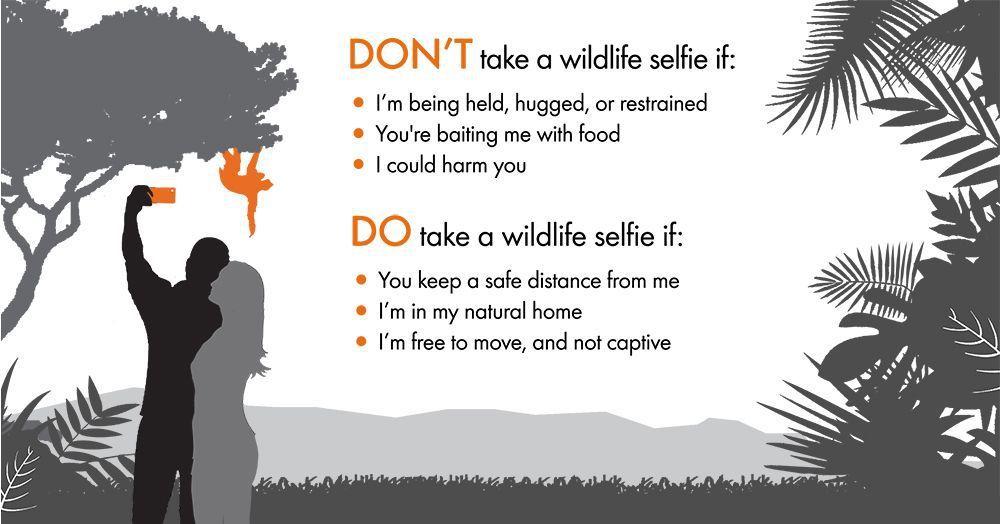 wildlife code graphic