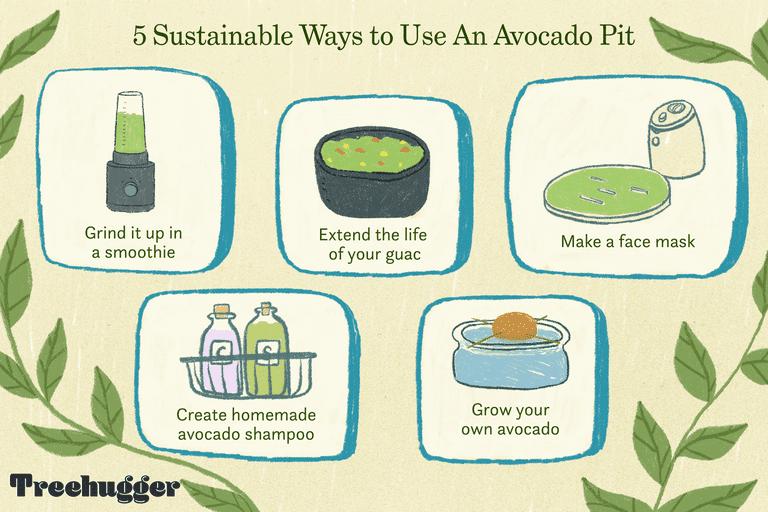ways to use avocado pit illustration