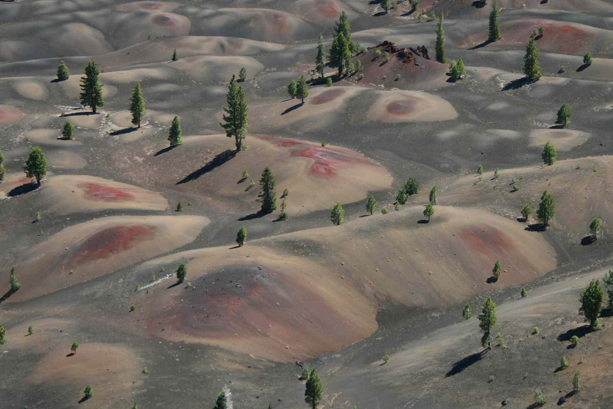Dunes of gray, red, and tan sand dotted with pine trees