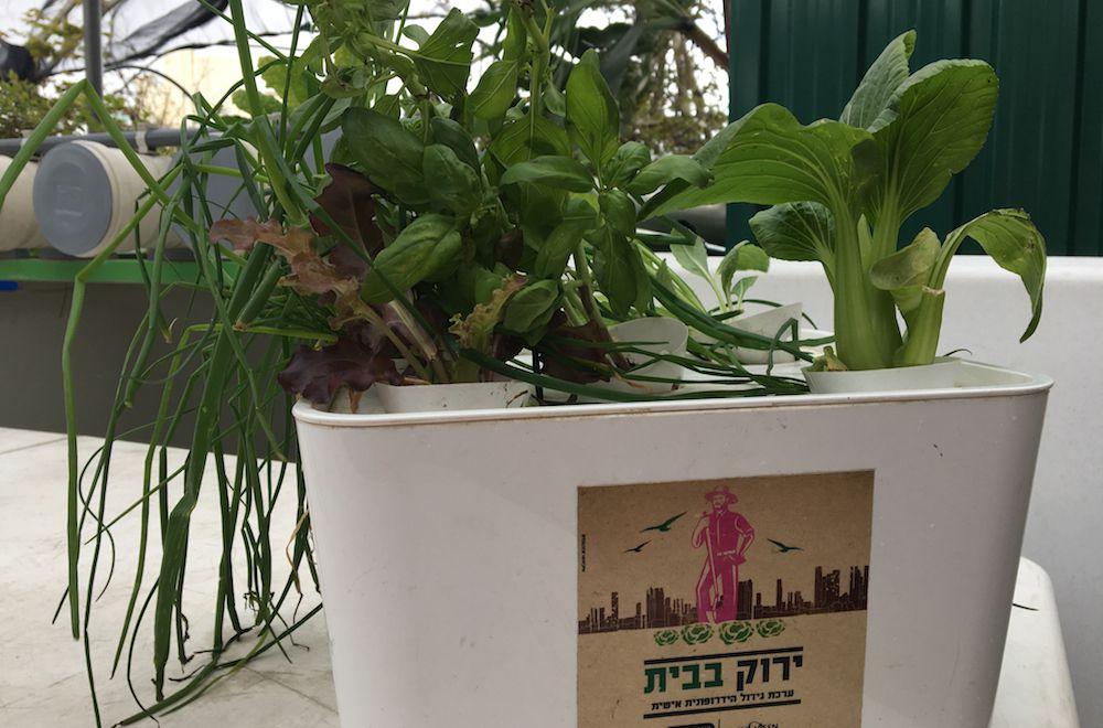 hydroponics box