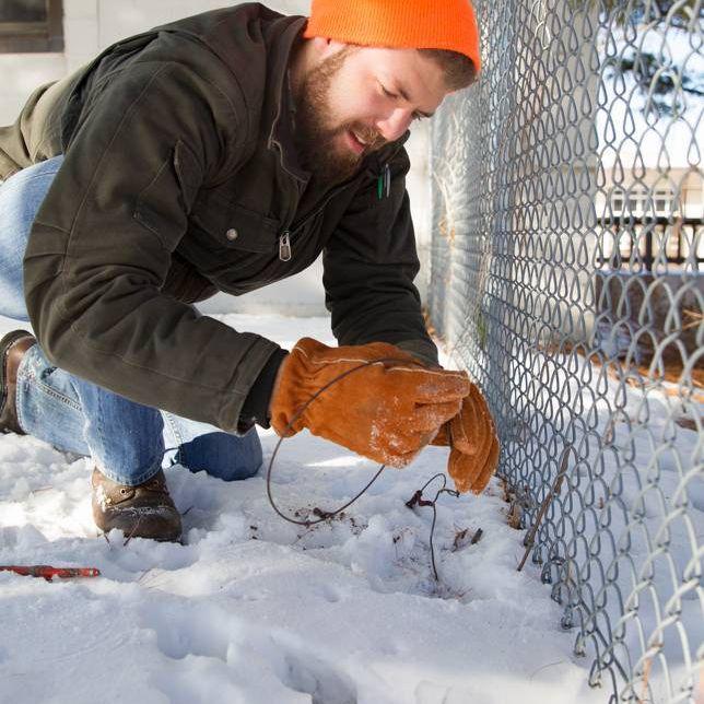 setting a trap along a fenceline