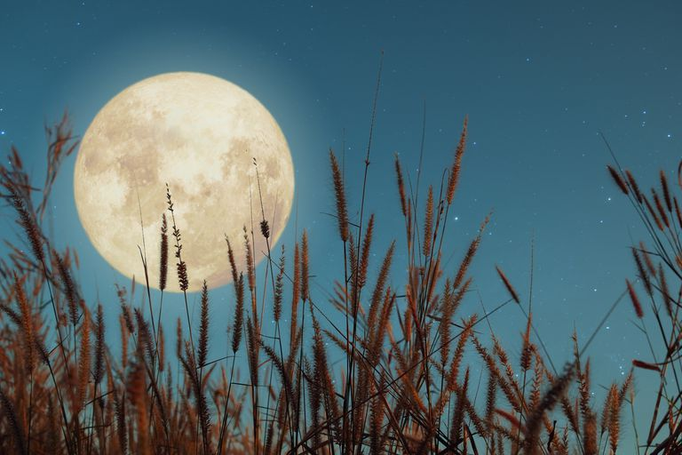 Close-up of a full moon over a wheat field at dusk.