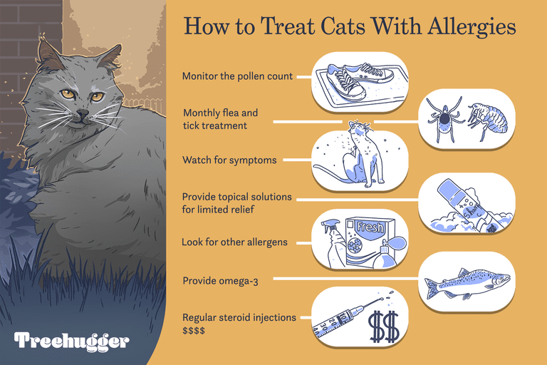 how to treat cats with allergies illustration