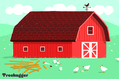 The exterior of red barn with planks of wood, a saw, and a few chickens in front of it