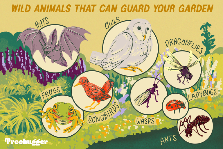 wild animals that can guard your guarden