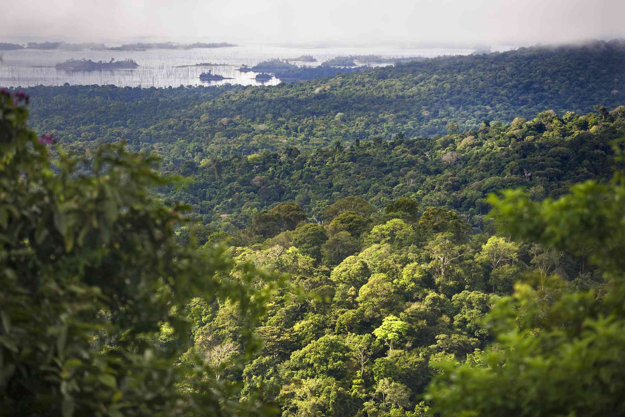 Aerial view of Suriname rainforest and lake