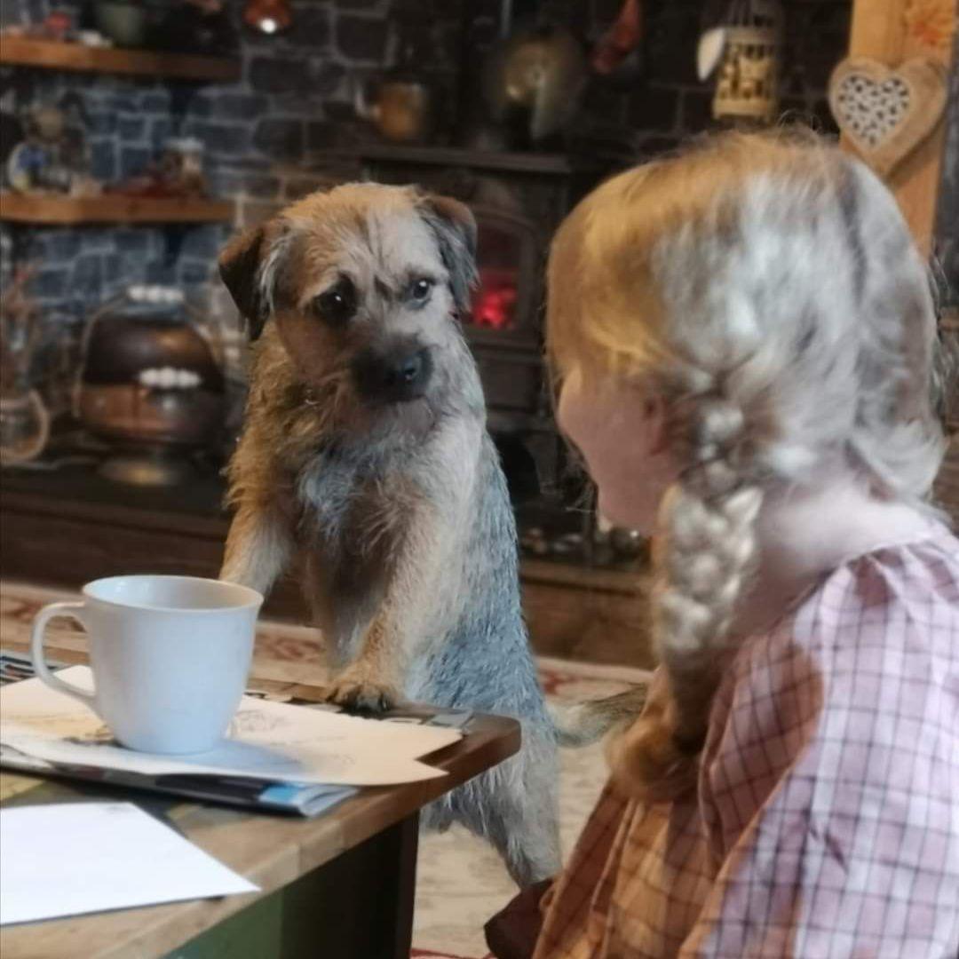 dog and homeschooler