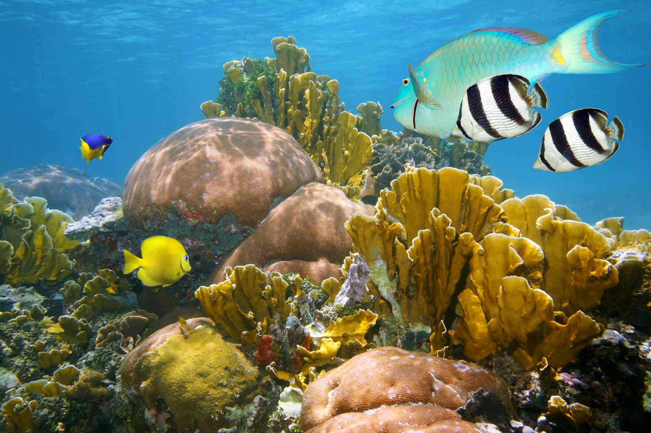 coral reef filled with yellow, black and white striped, and iridescent tropical fish