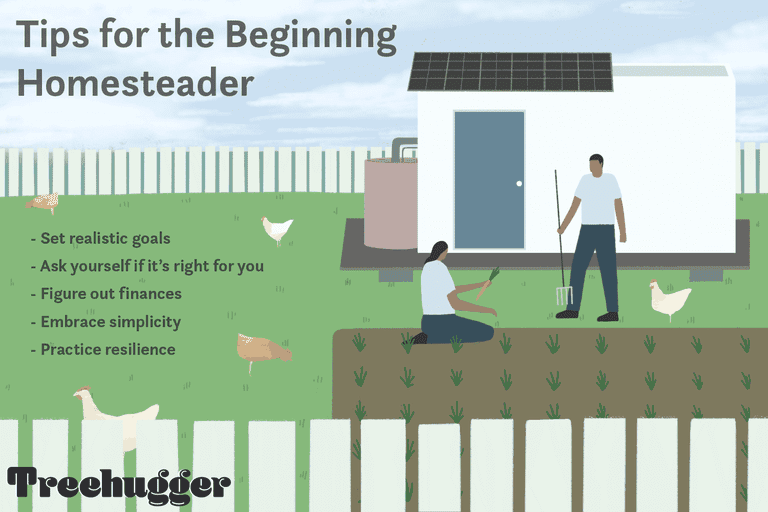 tips for the beginning homesteader