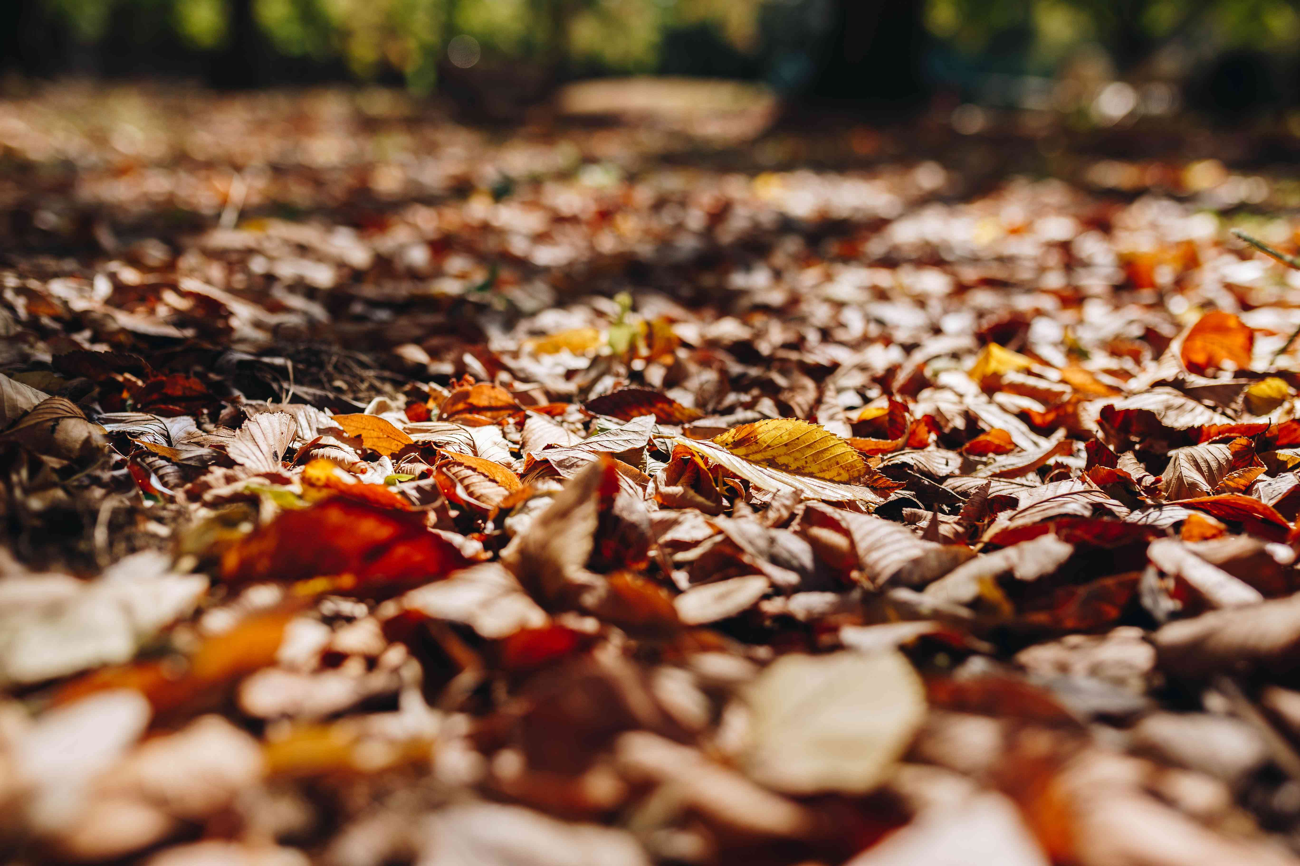 piles of fall leaves on ground