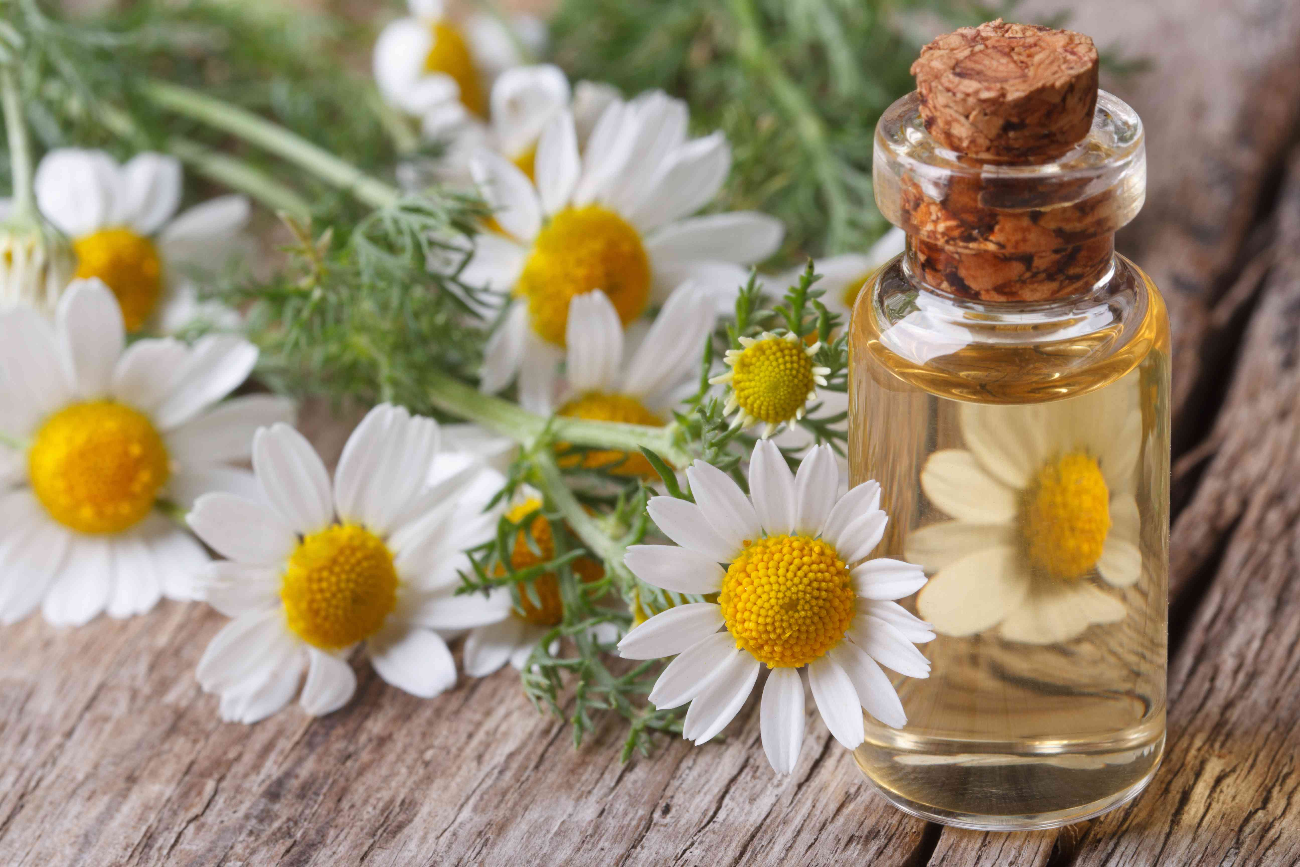 oil of chamomile flowers in a glass bottle macro