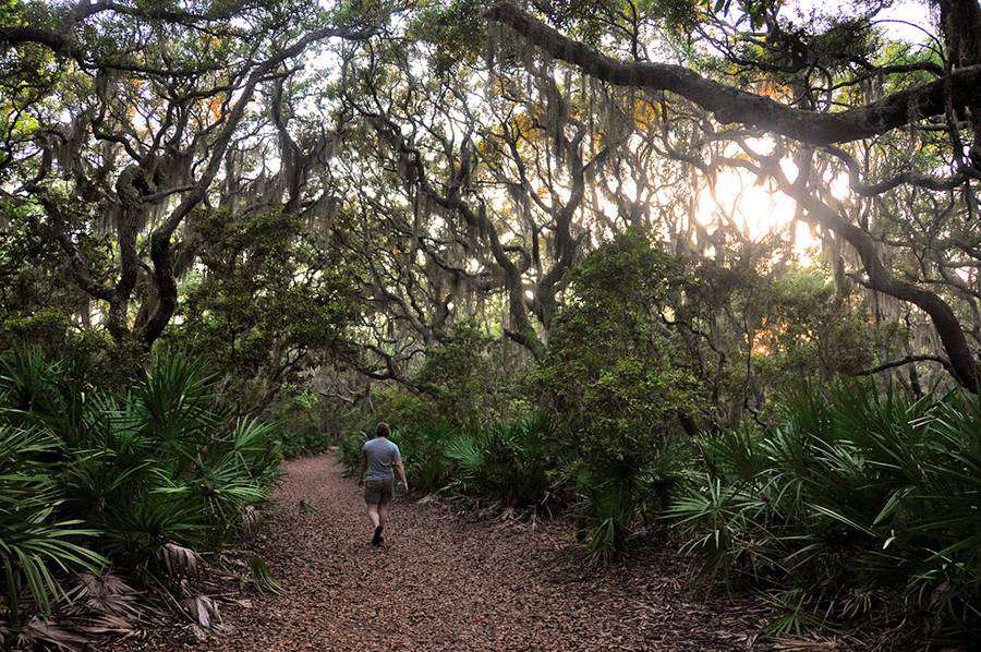 Cumberland Island: Hiking