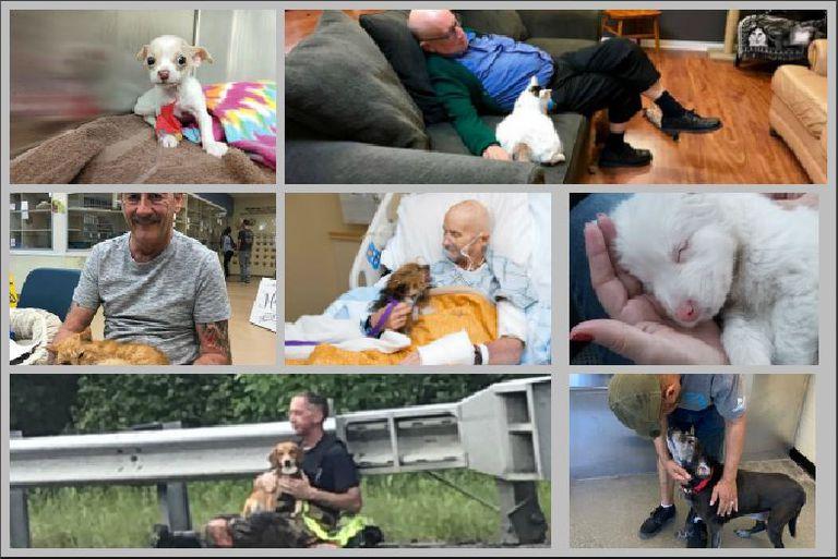13 de las historias de mascotas más conmovedoras de la década