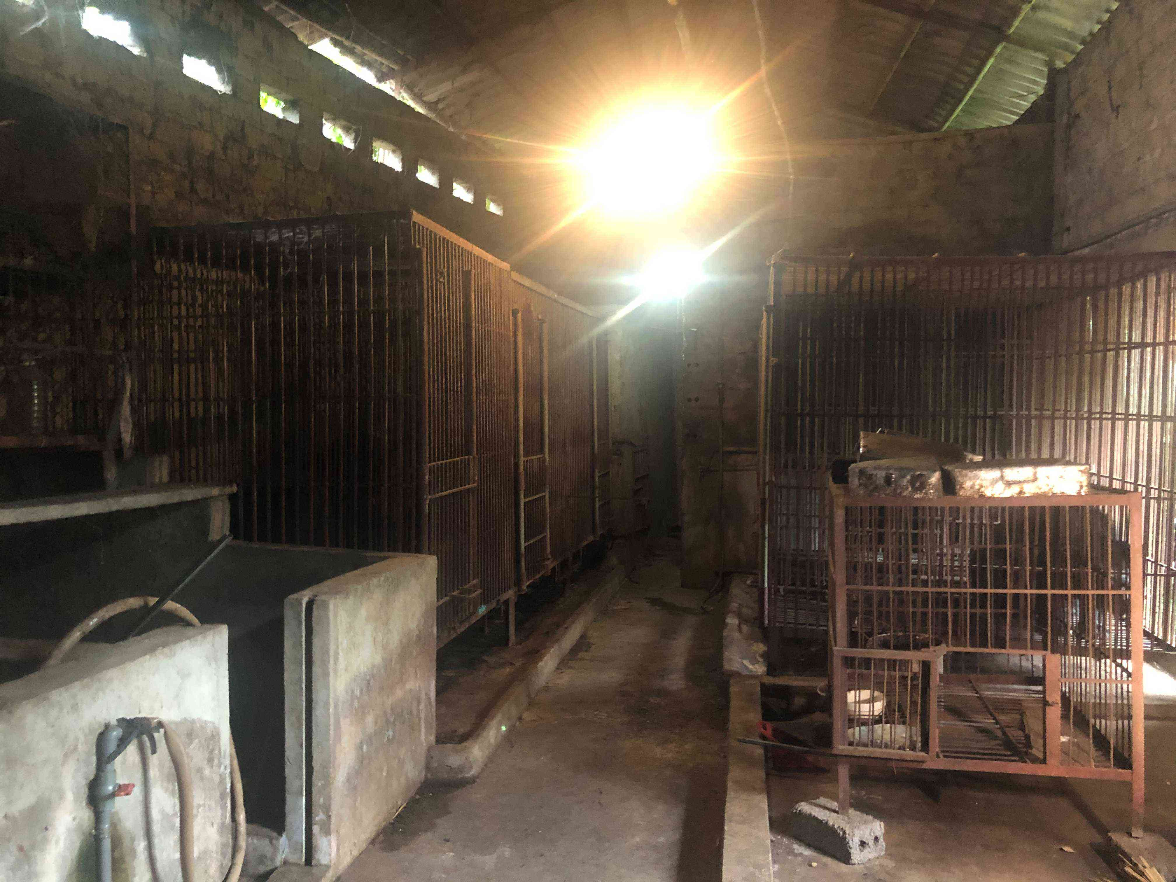 inside a bile farm
