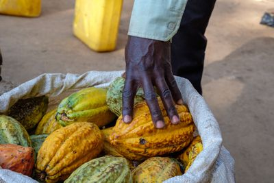 cocoa pods in a bag