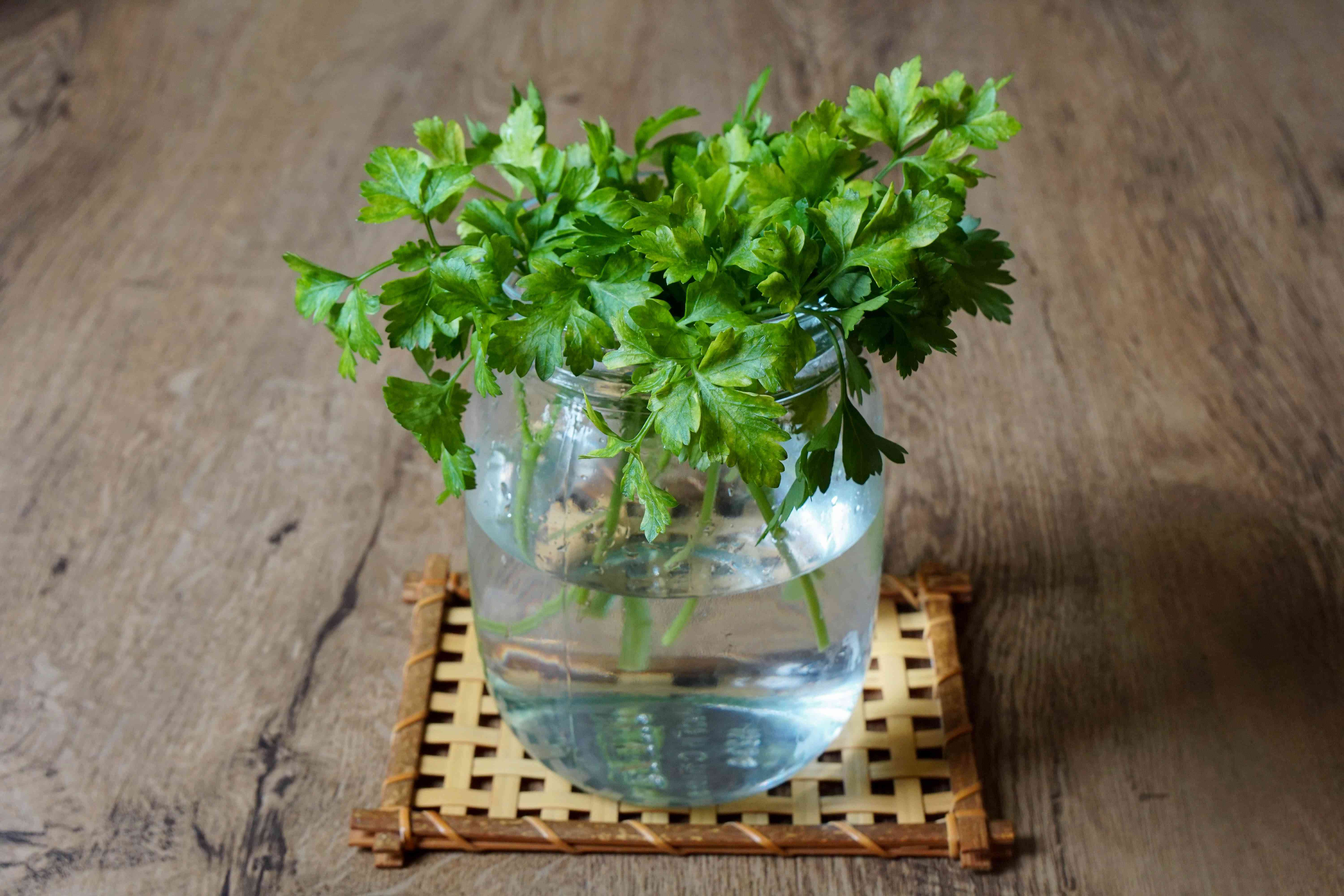 fresh parsley is stored in glass jar with fresh water and sits on coaster
