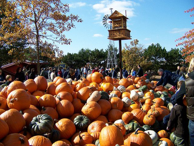 11 Smashing Good Pumpkin Patches