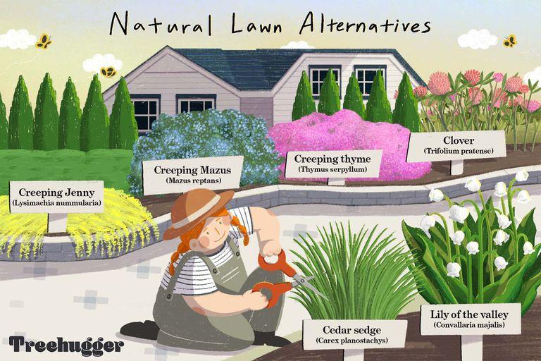 natural lawn alternatives illustration