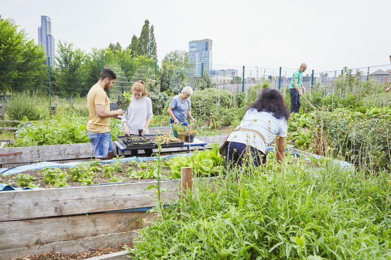 Volunteers working in a community garden