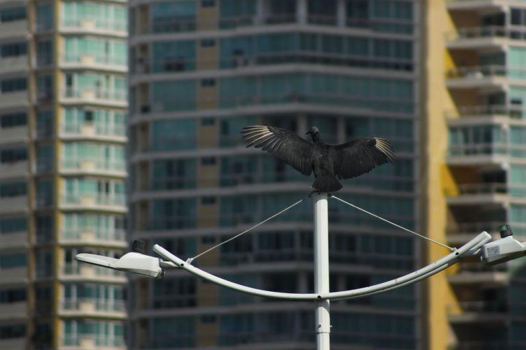 A pigeon against a city landscape.
