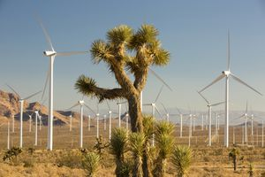 Part of the Tehachapi Pass wind farm, the first large scale wind farm area developed in the US, California, USA and a Joshua Tree.