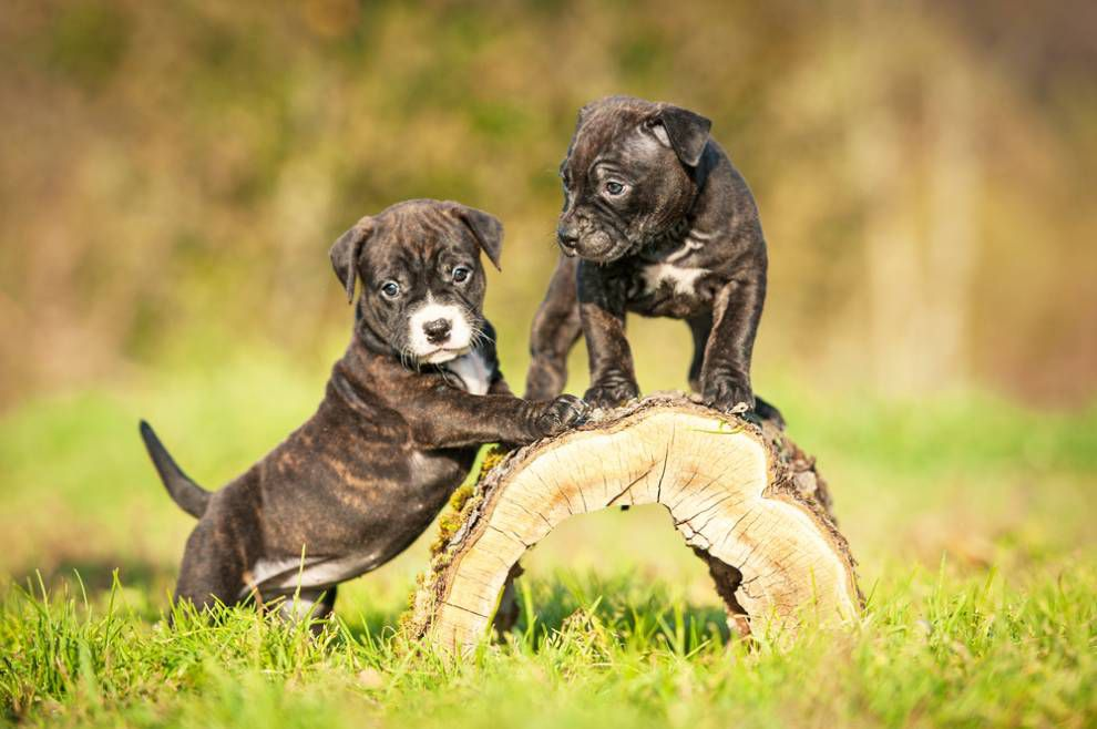 two puppies crawling on a log