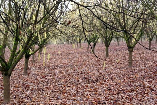 filbert grove