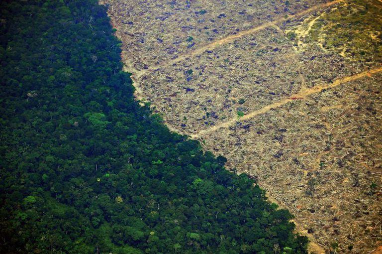 Los seres humanos se están secando la selva amazónica