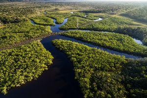 amazon rainforest, forest, drone shot