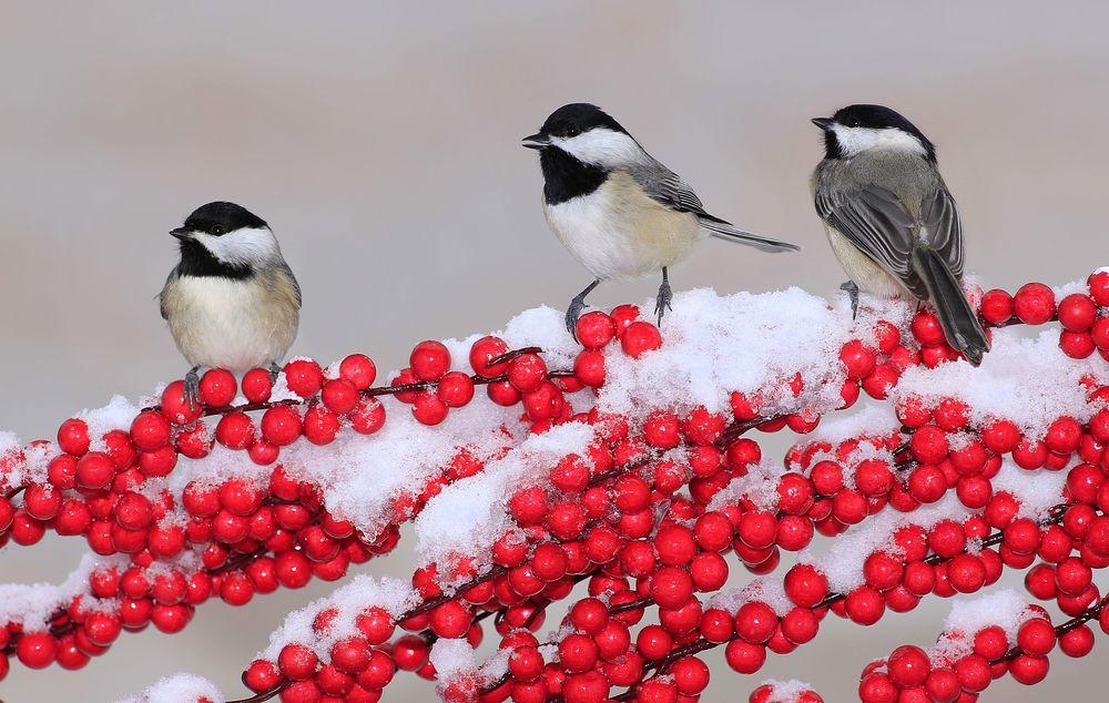 Many birds sound out