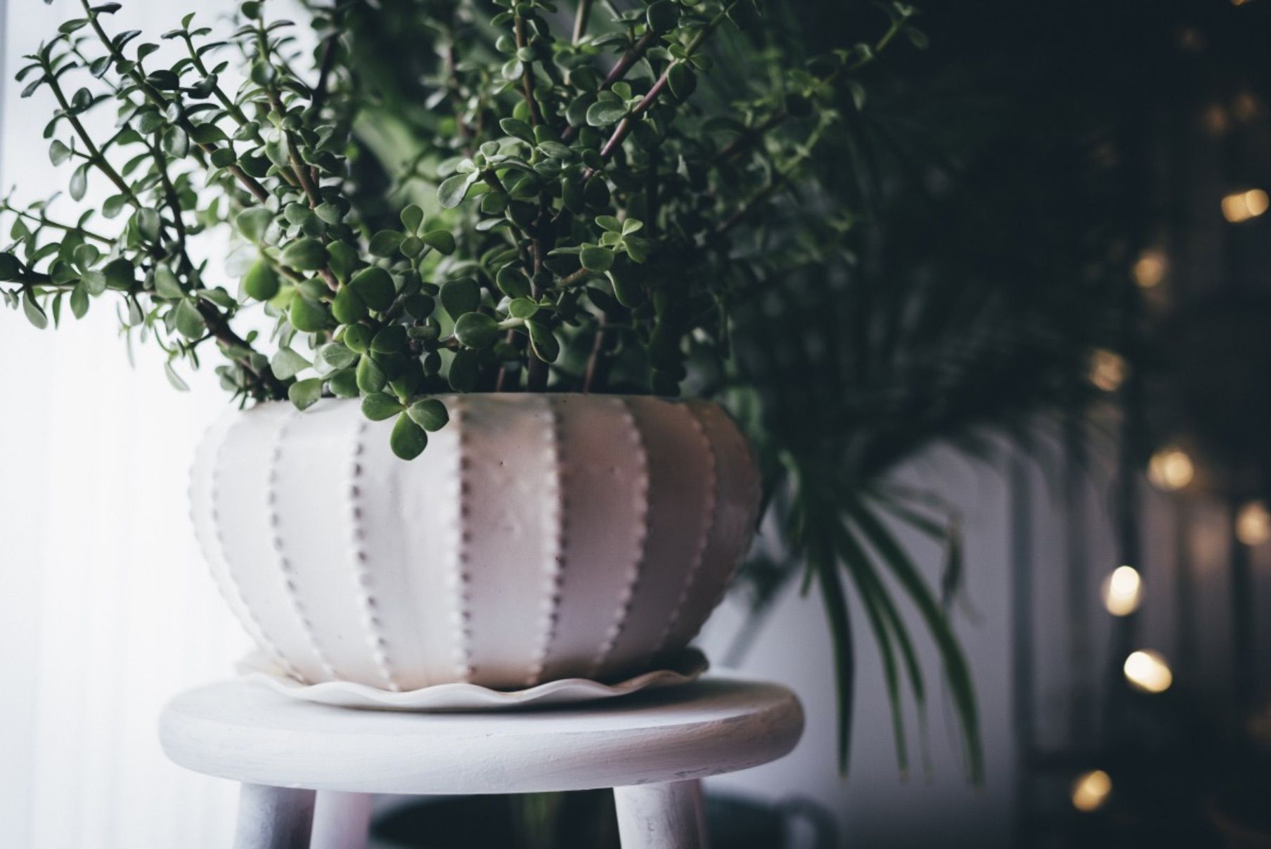 15 Houseplant Looks We're Loving Right Now