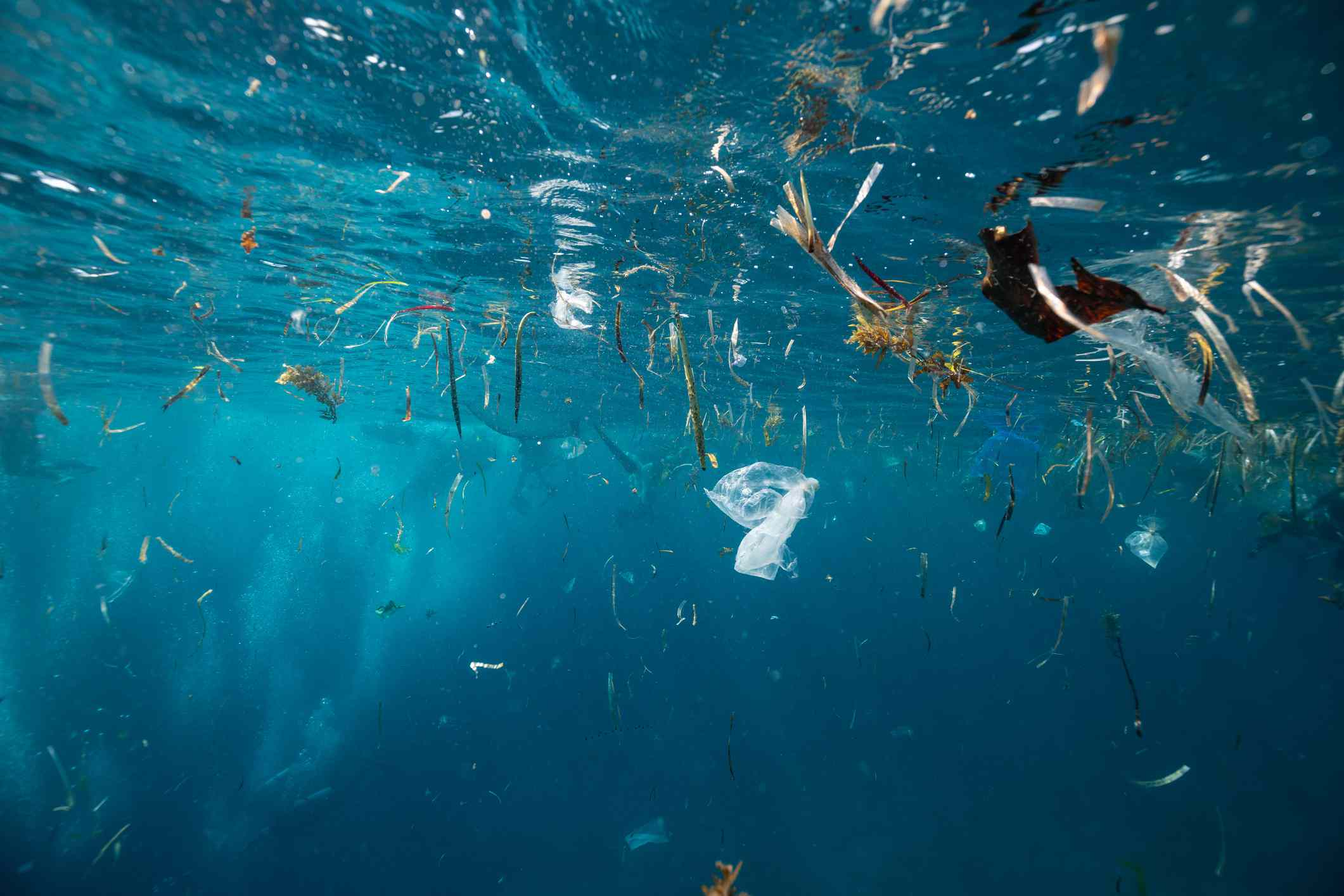 Plastic garbage is swimming on rhe water surface - stock photo