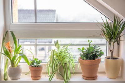 5 indoor house plants that clean your air in window