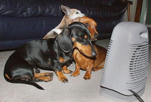 5 estupendos calefactores portátiles eléctricos