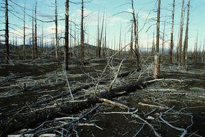 Dead and fallen trees in a barren landscape