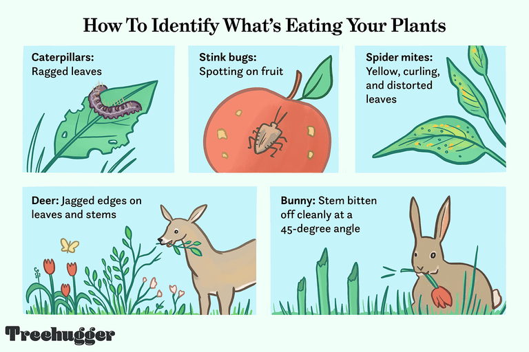 how to tell what's eating your plants