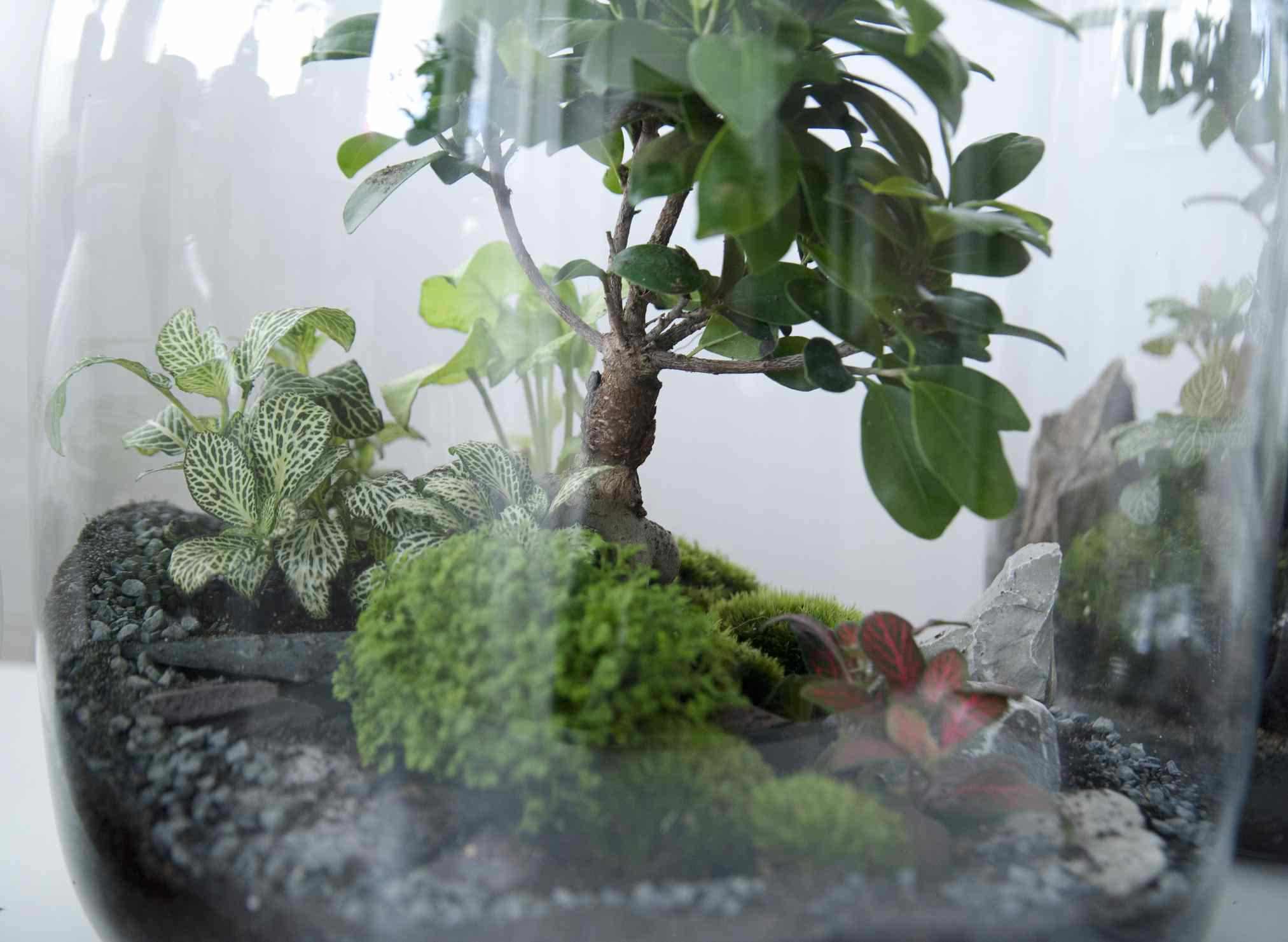 Plants growing in a terrarium mason jar.